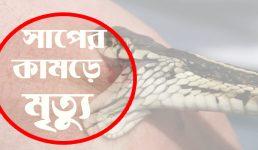 চুয়াডাঙ্গার আলমডাঙ্গায় সাপের কামড়ে গৃহবধূর মৃত্যু